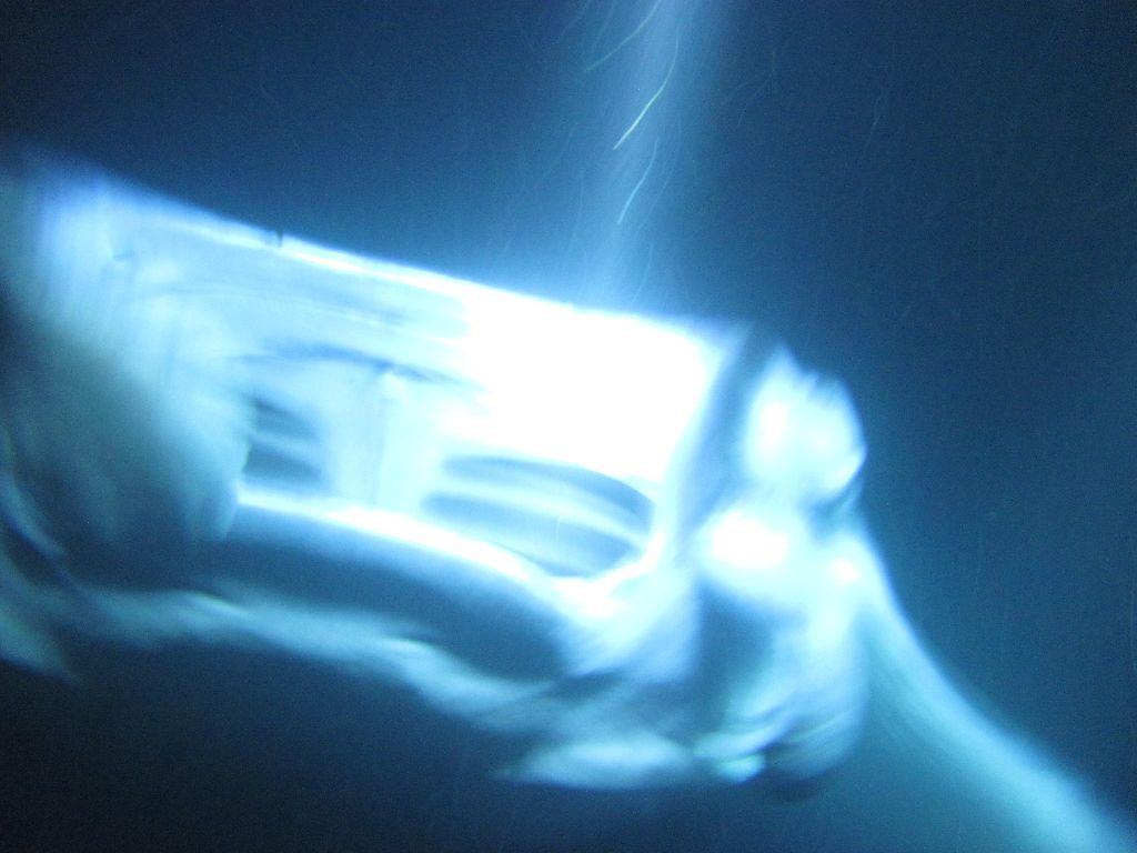 Flitterwochen-Hawaii-Manta Ray Diving